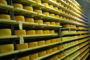 Verschiedene Käsearten im Keller